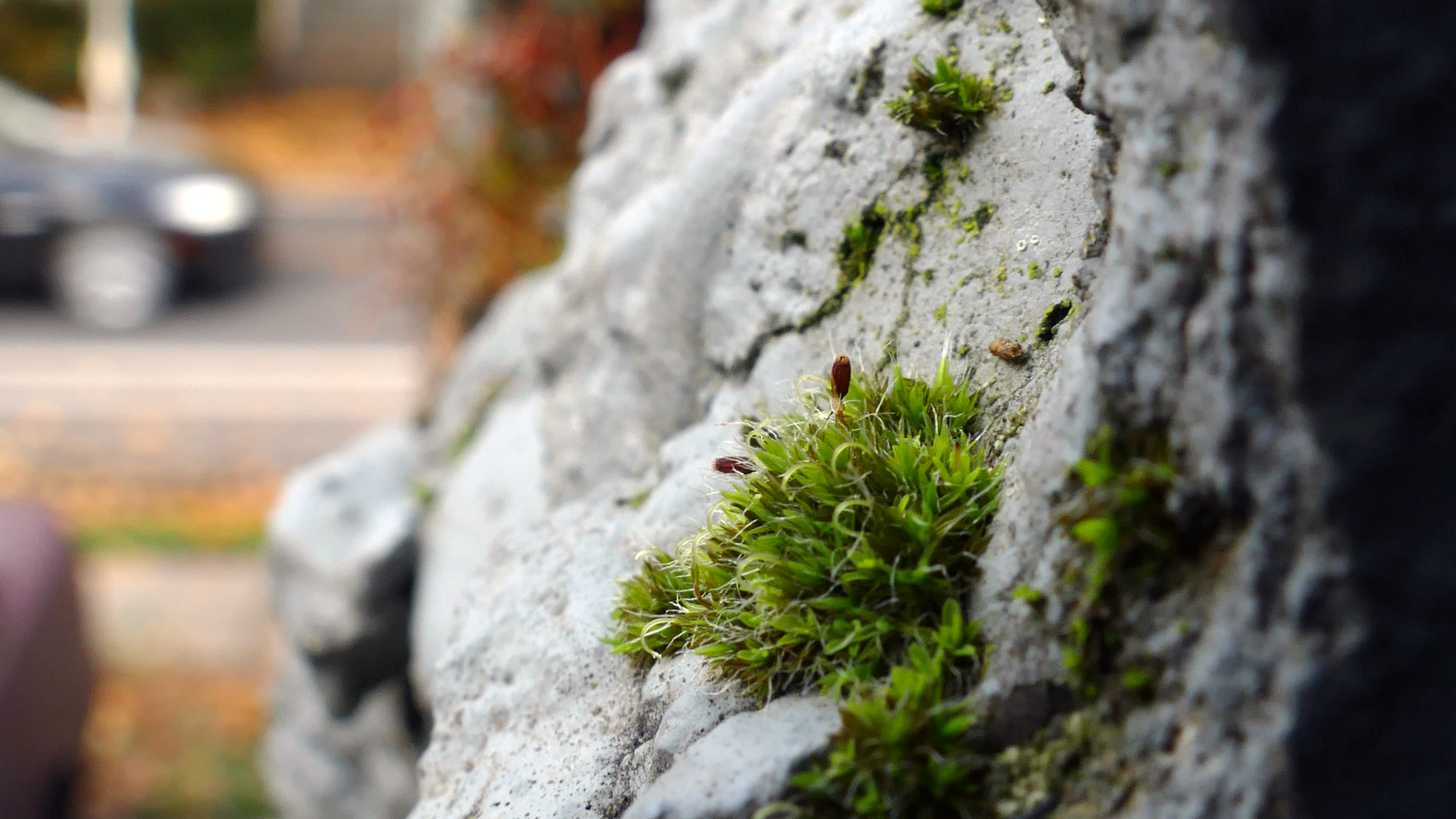 moss growing on a partially collapsed wall